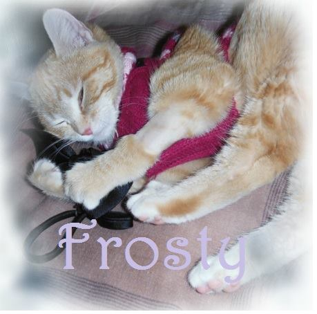 Frosty the Frozen Kitten