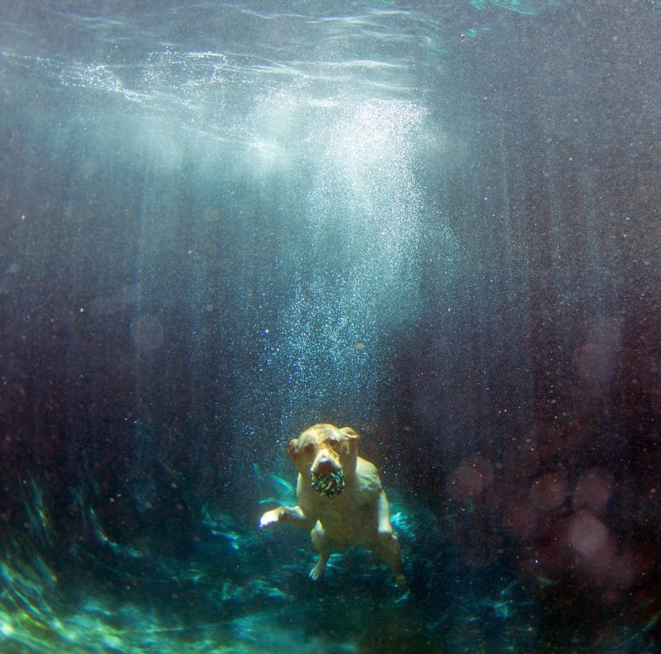 Bardot, The Diving Dog