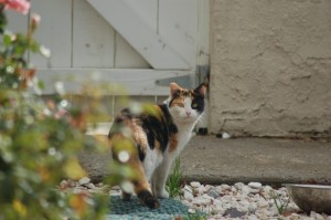 What to do With Ferals in Your Neighborhood