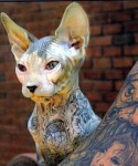 tattoo-cat-3_thumb
