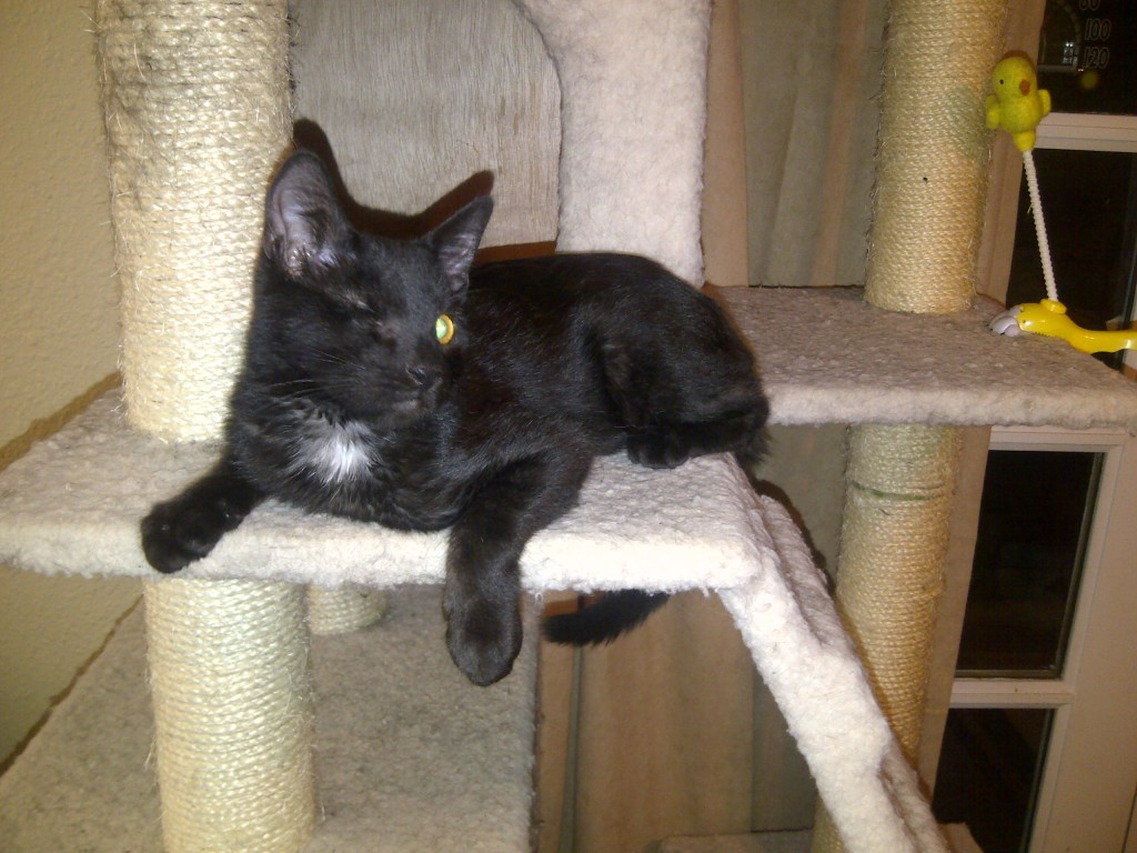 Delios My One Eyed Black Kitten