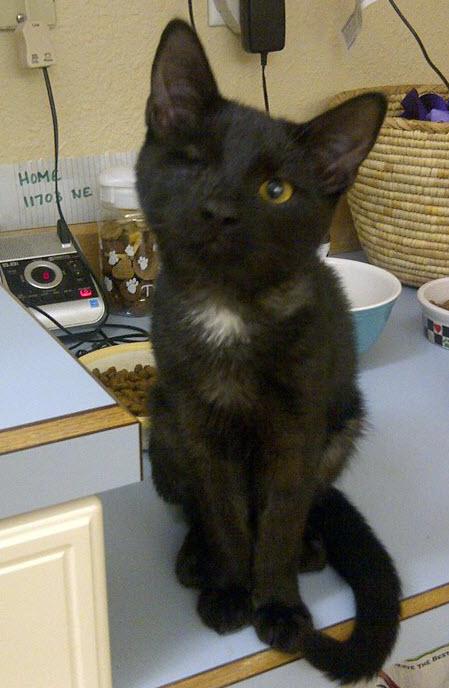 Black Cat Missing Eye