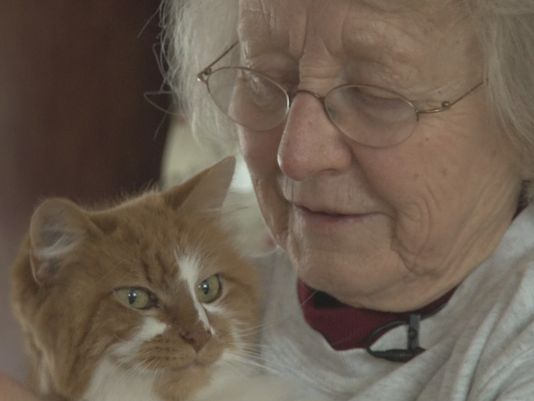 Lost Cat Returned to 80 Year Old Woman After 3 years