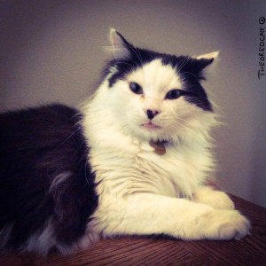 Podcast-The Kitty Chef-Cooking with Oreo the Cat