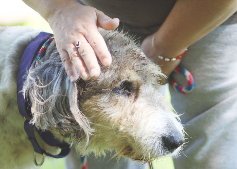 Dog Who Spent 14 Years On a Chain Is Set Free and Plays on Grass For The First Time
