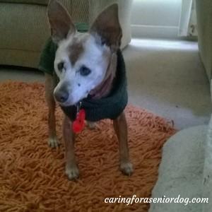 Senior Moments- How to Housebreak an Older Dog