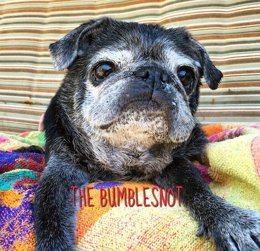 Bumblesnot-A Gentle King of His Castle Who Steals Our Hearts