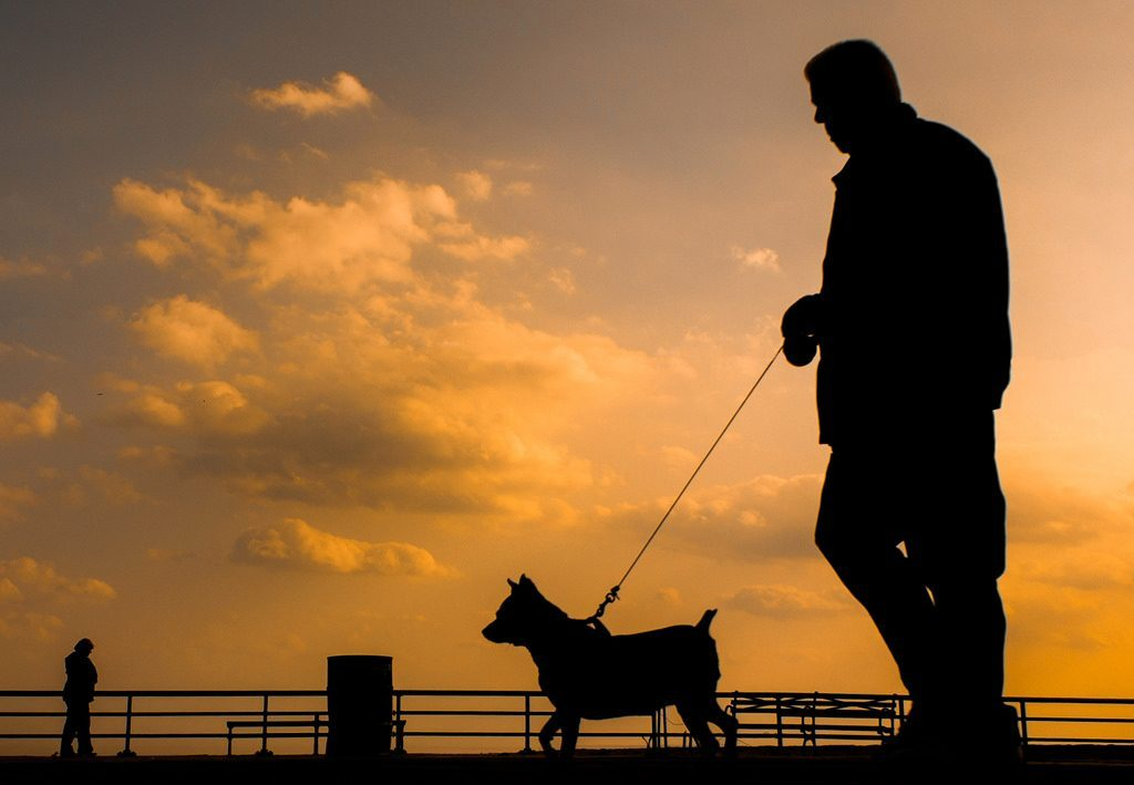 Podcast: Night Safety For Your Dog With a Newly Invented Product