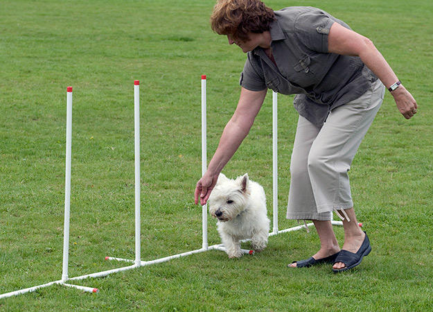 The Number 1 Way For Success in Reaching Your Dog Training Goals